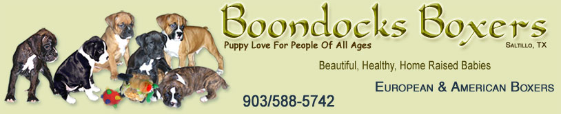 Boondocks Boxers  Beautiful, healthy, home raised American and